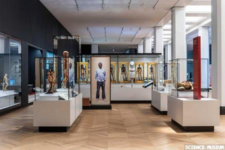 Medicine: The Wellcome Galleries